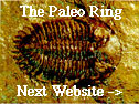 The Paleo Ring's NextWebsite